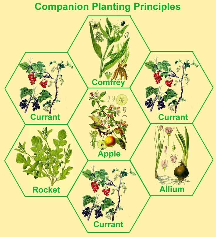 1000+ images about Permaculture Gardening on Pinterest.