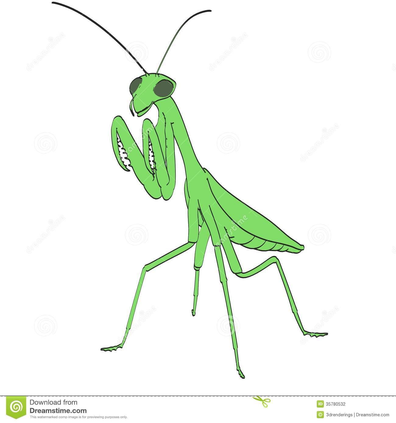 Image Of Praying Mantis Stock Photography.