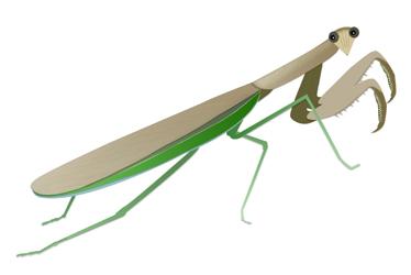 Best Mantis Clipart #24550.