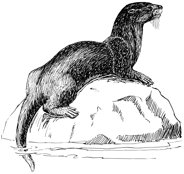 Free Otter Clipart, 1 page of Public Domain Clip Art.