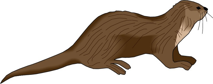 Otter clipart free.
