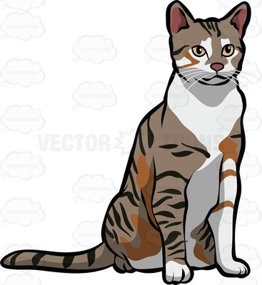 European shorthair Cartoon Clipart.