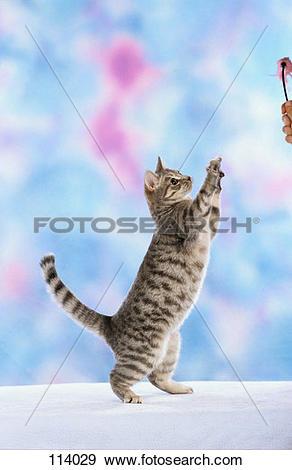 Stock Photograph of cat, European.