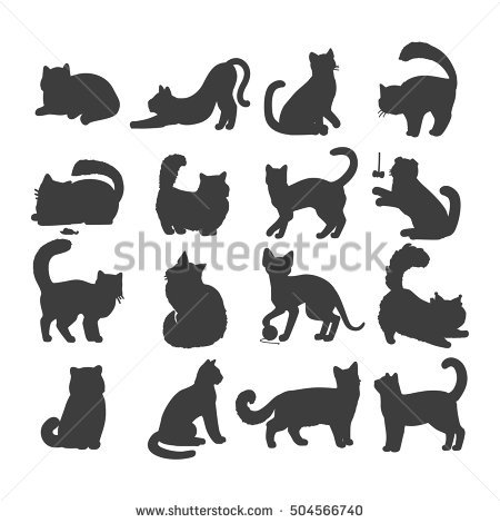 European Shorthair Stock Photos, Royalty.