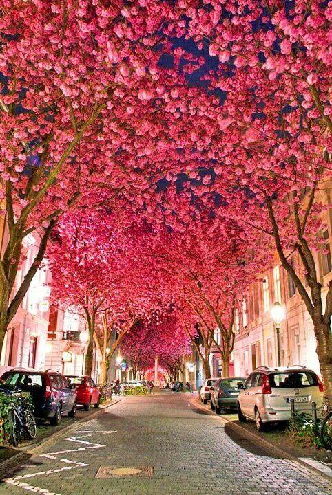 Germany's Cherry Blossom Season Totally Beats Yours.
