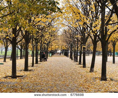 Autumn On Avenue Trees Paris Park Stock Photo 6776698.