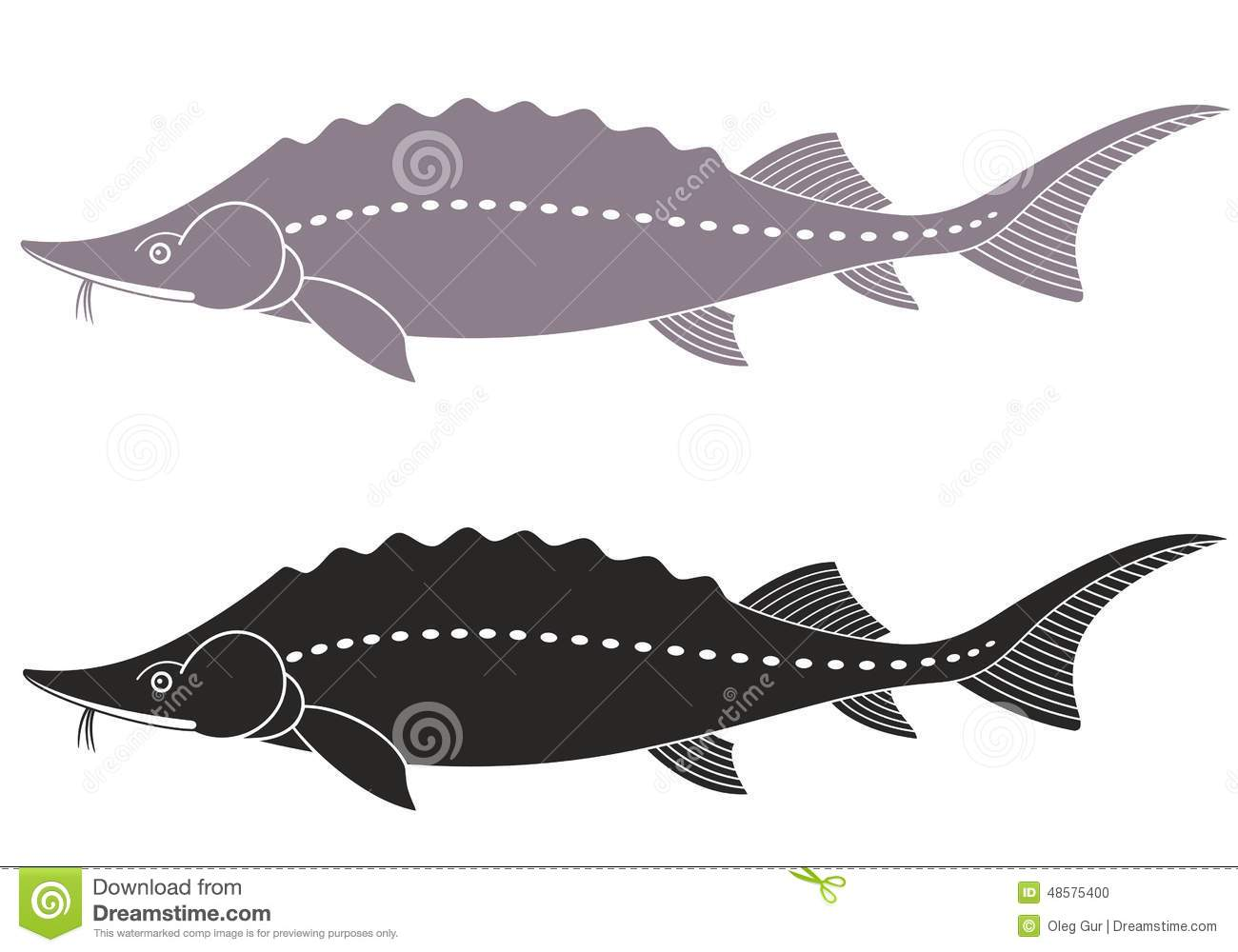 Sturgeon Stock Vector.