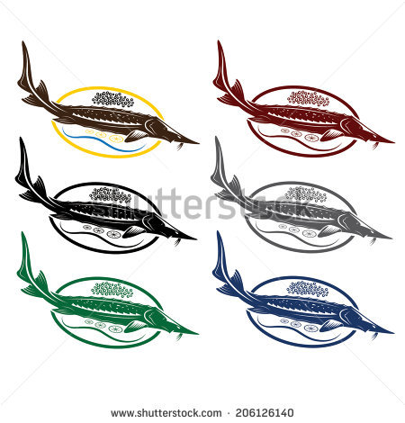 Atlantic Sturgeon Stock Photos, Royalty.