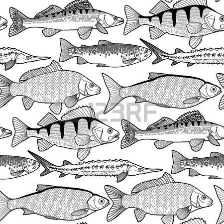 443 Sturgeon Cliparts, Stock Vector And Royalty Free Sturgeon.
