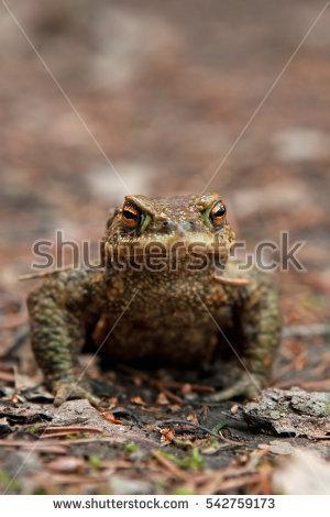 Toad Stock Photos, Royalty.