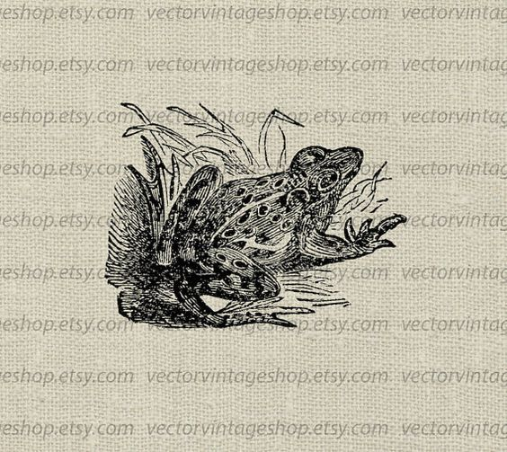 Frog Vector Digital Clipart Instant Download, Pond Marsh Toad Clip.