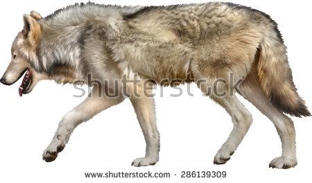 Wolf Stock.