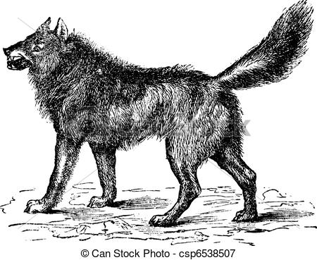 Clipart of Portrait of an European grey wolf (Canis lupus lupus.