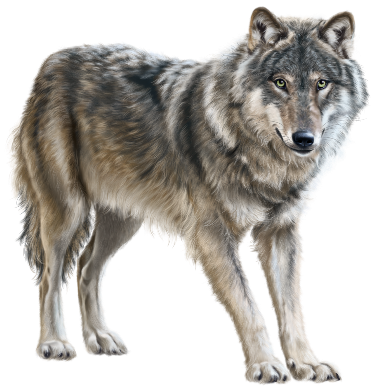 Wolf PNG Clip Art.