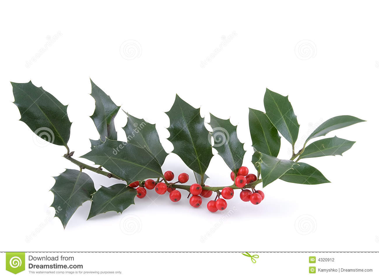 Sprig Of European Holly Royalty Free Stock Photo.