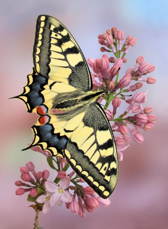 Dreaming is one wing of a butterfly and waking is the other.