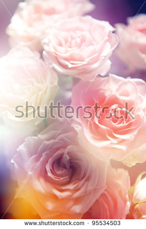 Yellow color rose free stock photos download (10,654 Free stock.