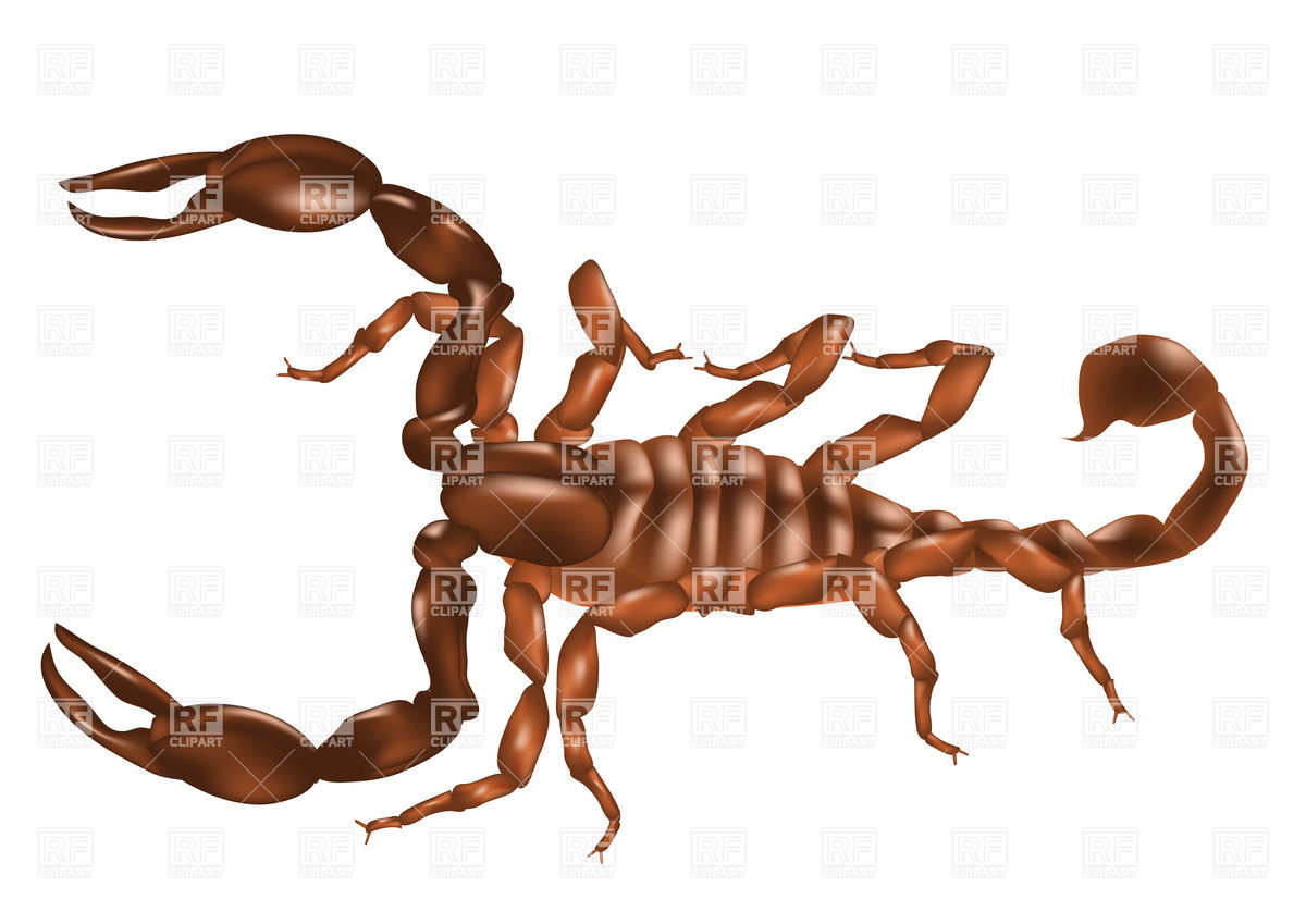 Scorpion isolated on white background Vector Image #38025.