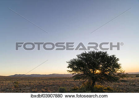 """Stock Photography of """"Tree, evening atmosphere, Bank Mountains."""