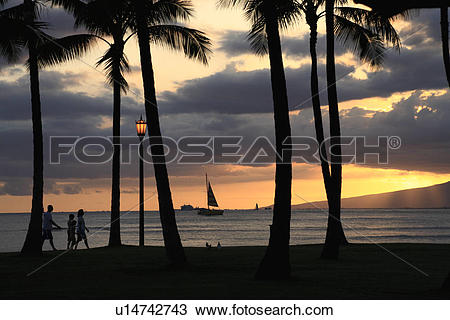 """Stock Photo of """"Evening Glow And Silhouette Of Palm Tree, Honolulu."""
