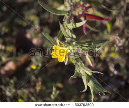 Dune Plant Stock Photos, Royalty.