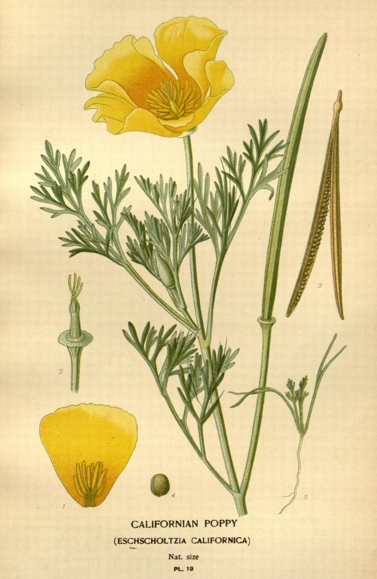 1000+ images about Botanical beauty on Pinterest.