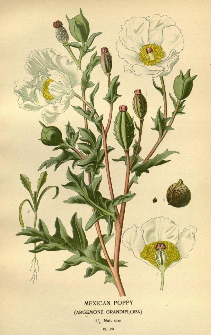 1000+ images about Montessori botanica on Pinterest.
