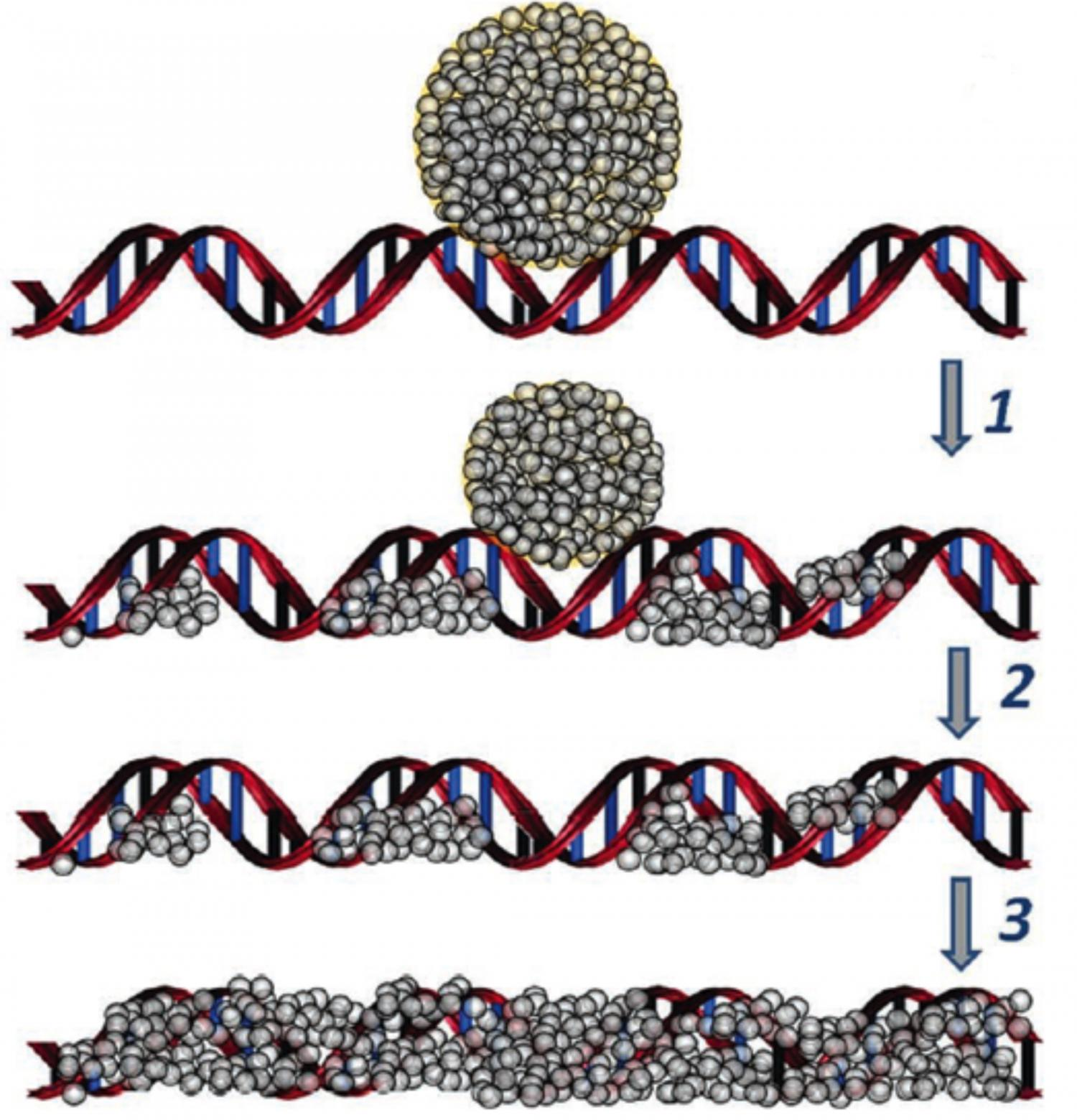 Scientists make silver nanowires based on DNA molecules.