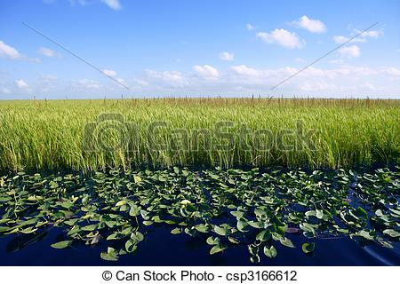 Stock Photo of Blue sky in Florida Everglades wetlands green.