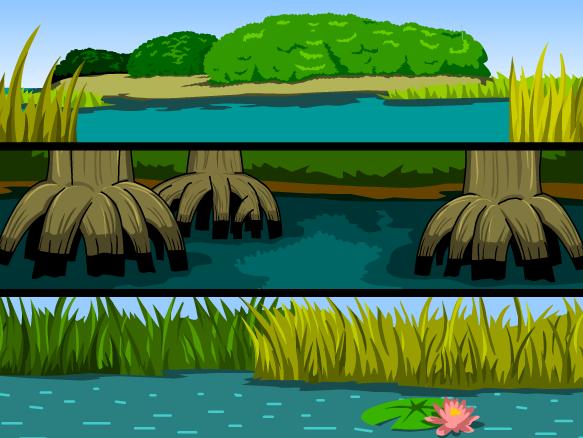 Everglades Lesson Plans and Lesson Ideas.