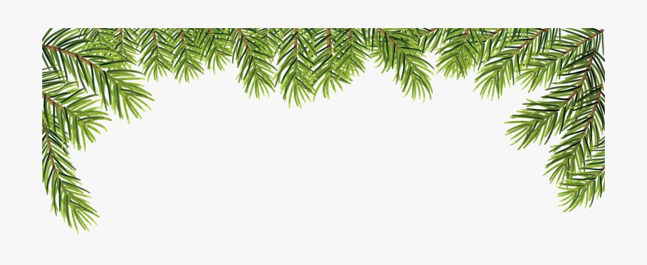 Leaves Transprent Png Free Download Evergreen Pine.