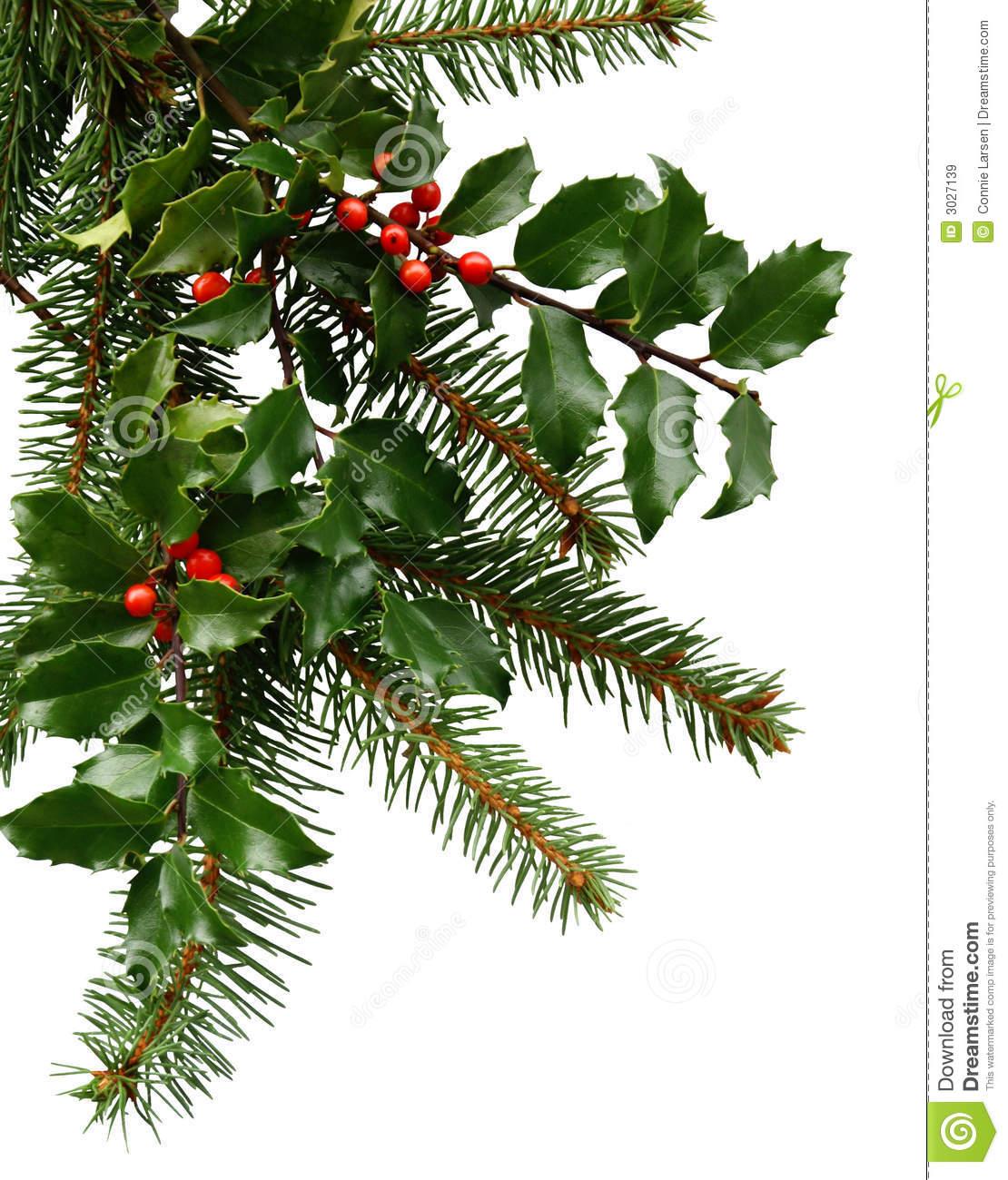 Evergreen Bough Clipart.