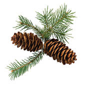 Pictures of Holly sprigs, evergreen boughs, and pine cones.
