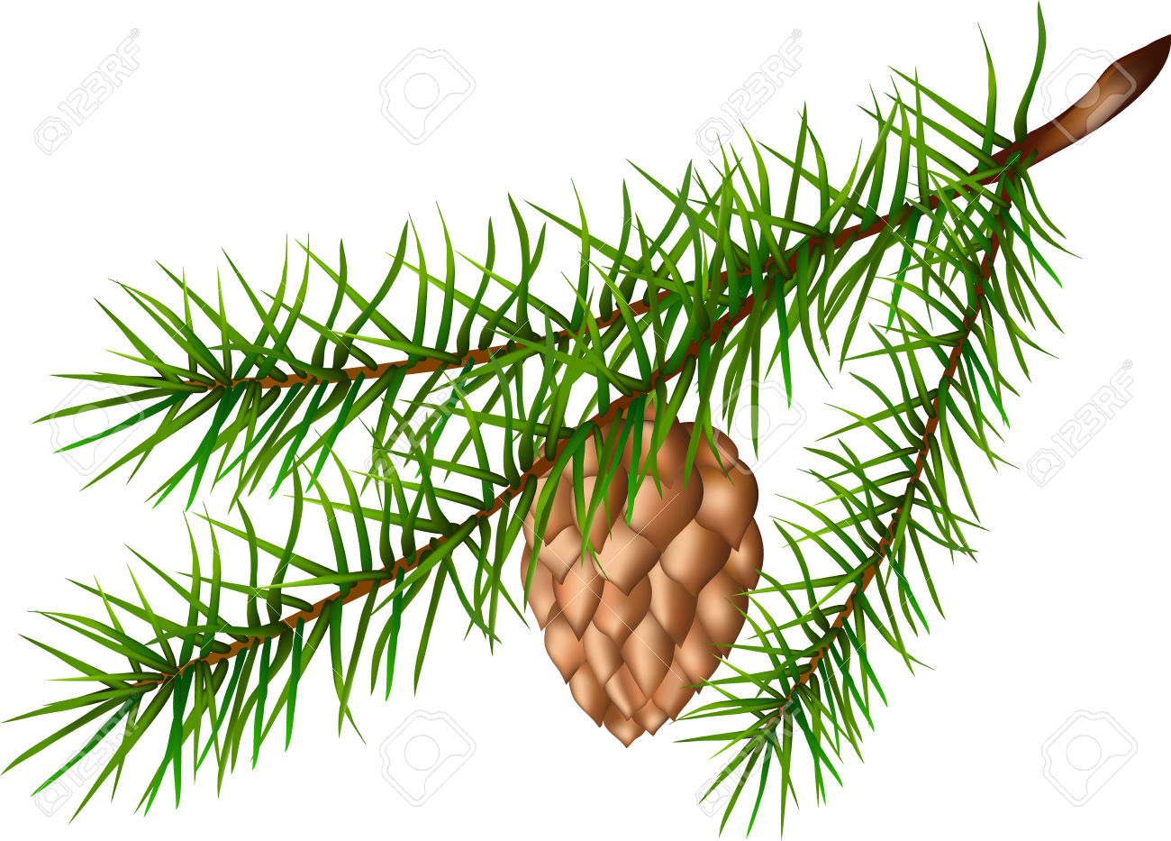 Evergreen branch clipart - Clipground Evergreen Branch