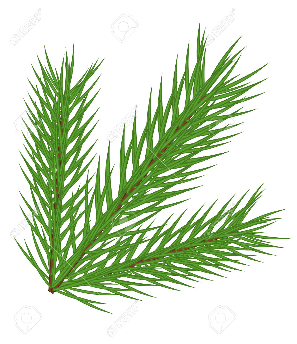 Fir Branch Isolated Royalty Free Cliparts, Vectors, And Stock.