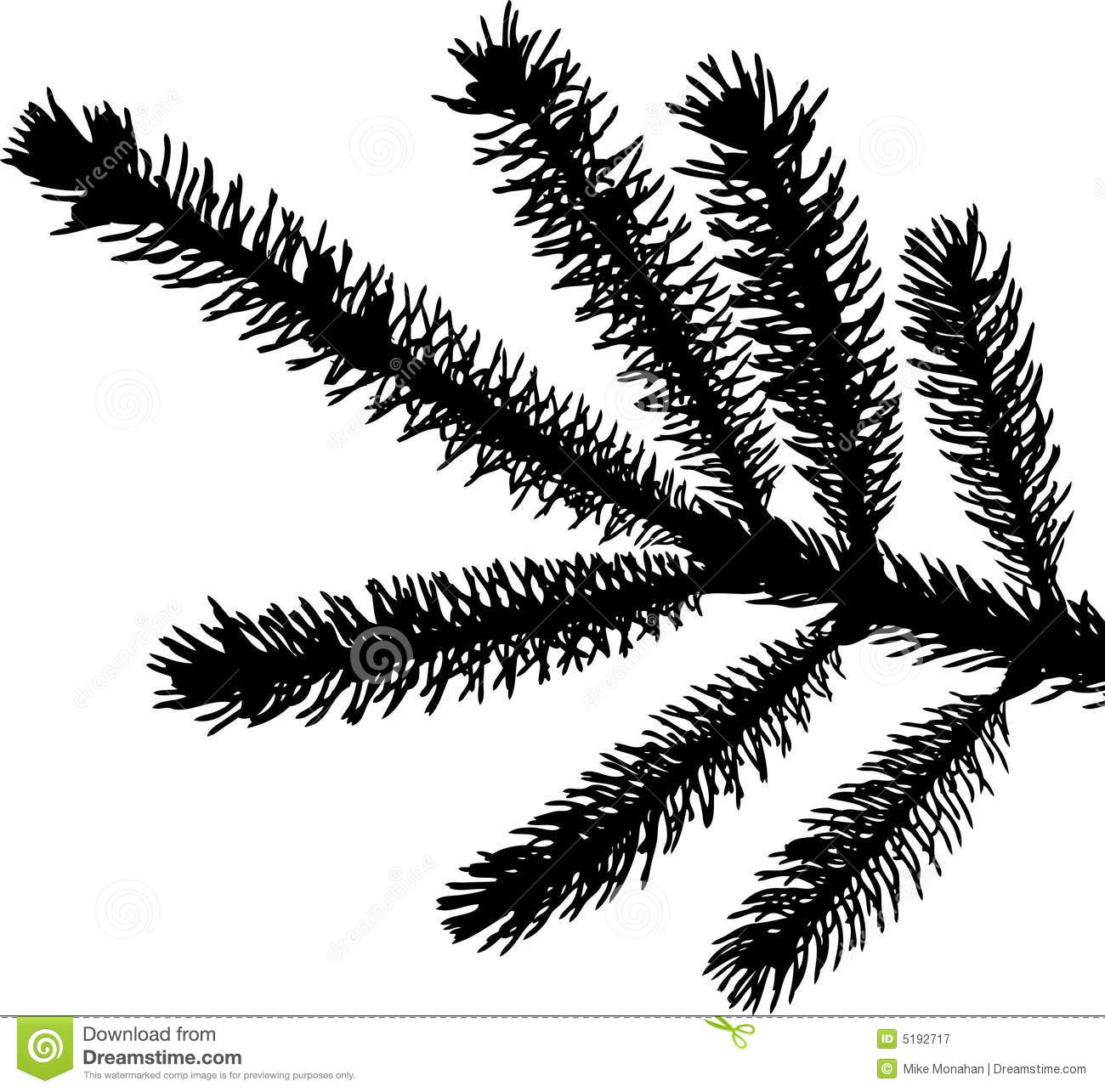 Evergreen Branch Silhouette Stock Illustrations.