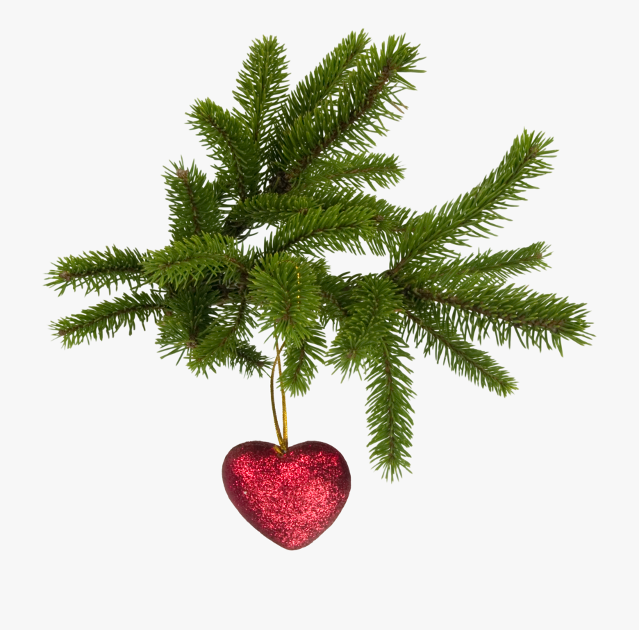 Pine Evergreen Branch Png Transparent Background.