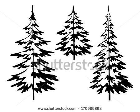 Evergreen Tree Stock Photos, Royalty.