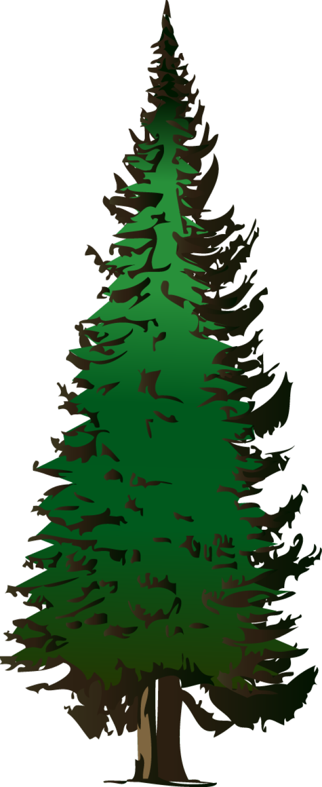 Evergreen trees clipart.