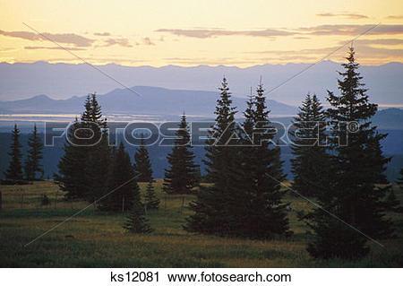 Stock Photography of Calendar Scenics, Evergreen, Mountain, Nature.