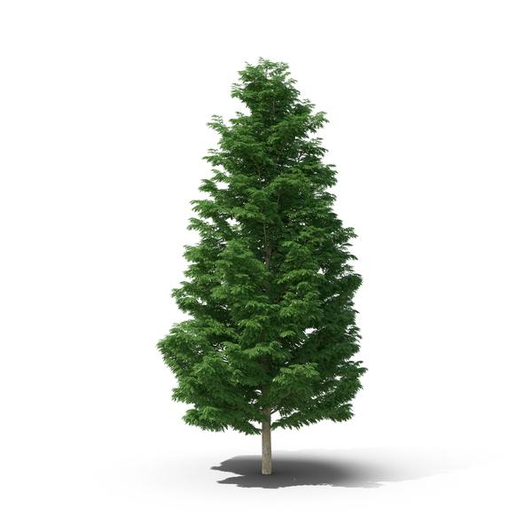Evergreen PNG Images & PSDs for Download.