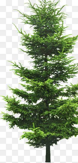Evergreen Png & Free Evergreen.png Transparent Images #31706.