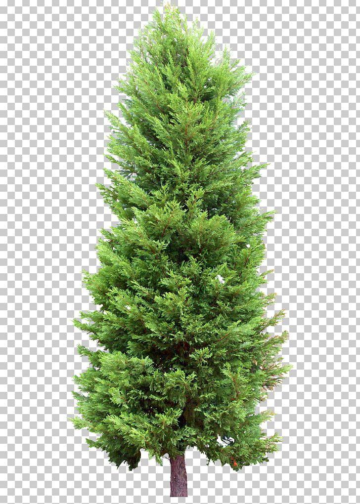 Fir Tree Pine Evergreen PNG, Clipart, Biome, Cedar, Christmas.