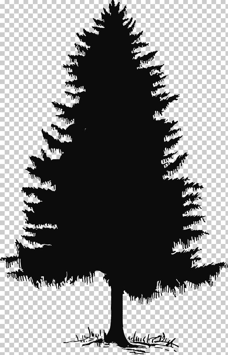 Evergreen Tree Pine Silhouette PNG, Clipart, Black And White, Branch.