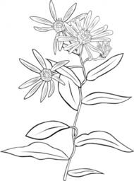Evergreen Shrub Clip Art Download 57 clip arts (Page 1.