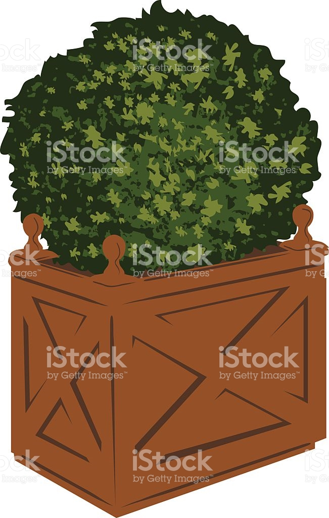 Potted Evergreen Shrub stock vector art 94973798.