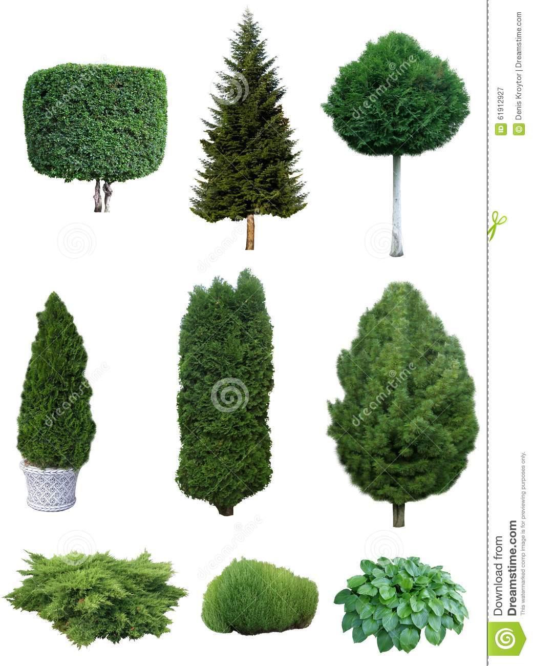 Set Of Trees And Shrubs. Stock Photo.