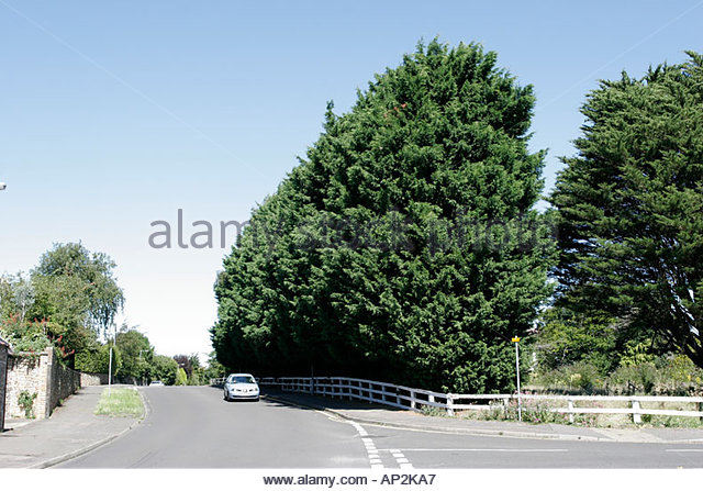 Monster Hedge Stock Photos & Monster Hedge Stock Images.
