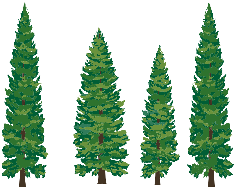 Clipart evergreen tree.