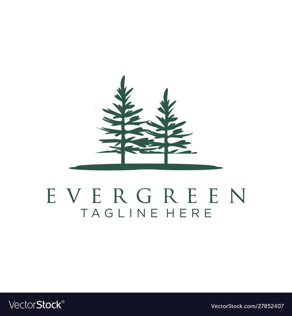 Evergreen pines spruce cedar trees logo design.